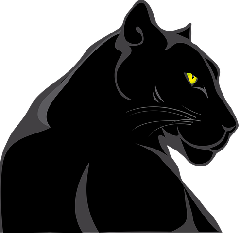 Image of a Black Panther